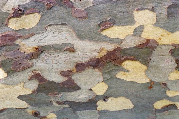 Natürliche textur, die durch die rissige rinde eines großen baumes erzeugt wird