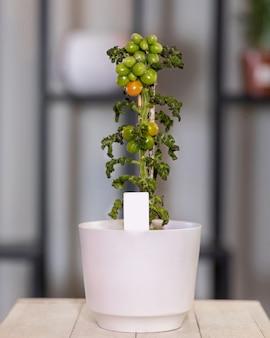 Natürliche tomatenpflanze im weißen topf