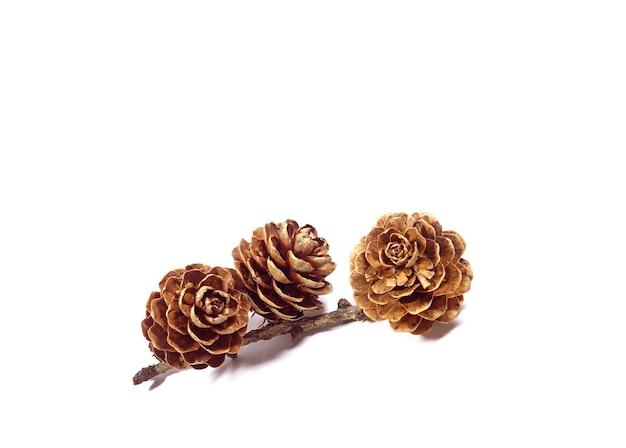 Natürliche trockene blütenartige kleine tannenzapfen mit zweig, der auf weiß isoliert wird