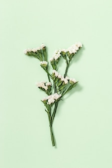 Natürliche trockene dekorative blume limonium, blätter und kleine blüte auf weichem grün. blumendesign