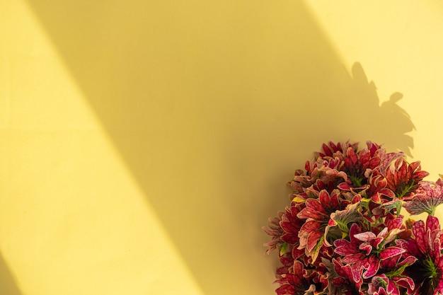 Natürliche zusammensetzung. minimalistischer hintergrund aus roten blättern auf gelbem papier