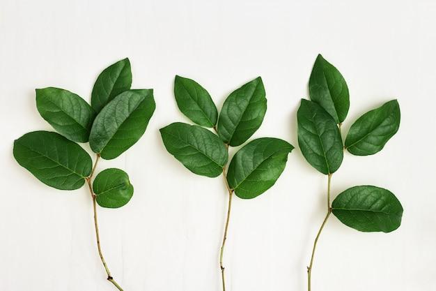 Natürliche zweige des baumes mit grünen blättern auf hellem papierhintergrund. grußkarte mit frühlingsgrünpflanzen. umweltfreundliches konzept. draufsicht und flach liegen.