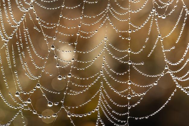 Natürlicher abstrakter hintergrund mit glitzernden wassertropfen auf einem spinnennetz.