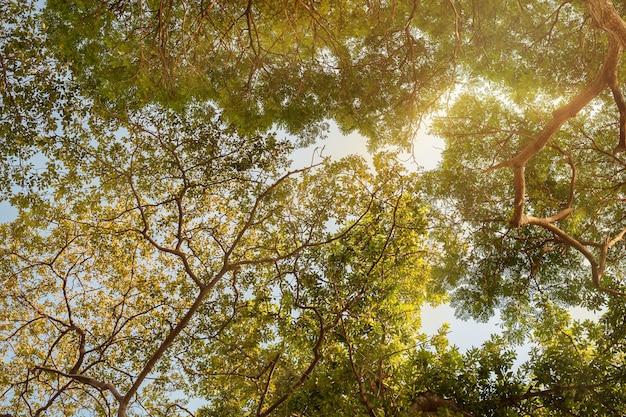 Natürlicher baumhintergrund. unteransicht der bäume