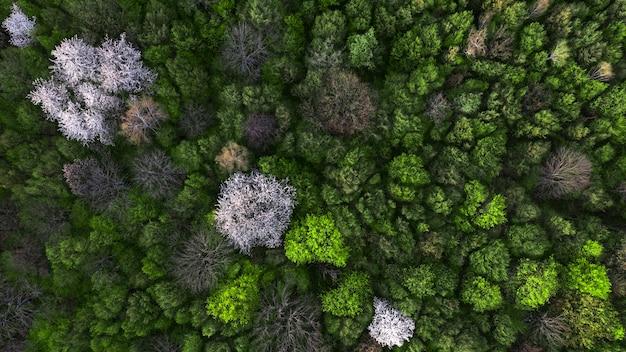 Natürlicher dunkler hintergrund oder muster. frühlingswald mit blühenden obstbäumen. draufsicht.