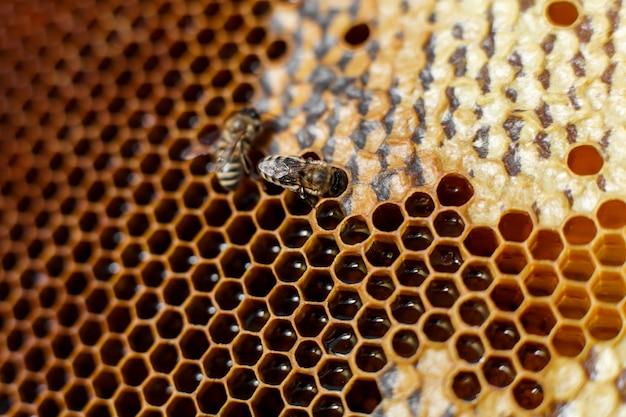 Natürlicher farbabschluß herauf bienenwabe im hölzernen bienenstock mit bienen auf ihm. imkerei.