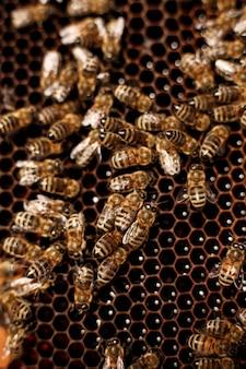 Natürlicher farbabschluß herauf bienenwabe im hölzernen bienenstock mit bienen auf ihm.