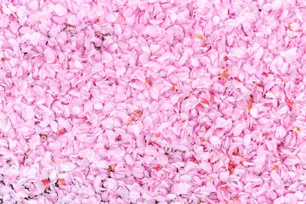Natürlicher frühlingshintergrund mit den rosa blumenblättern einer kirschblume. blütenblätter liegen auf der straße.