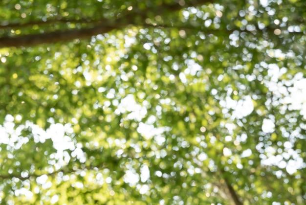 Natürlicher grüner bokeh zusammenfassungshintergrund
