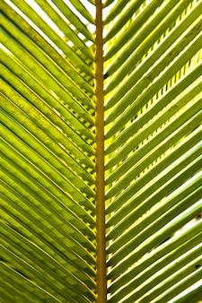 Natürlicher grüner hintergrund der abstrakten gestreiften palme