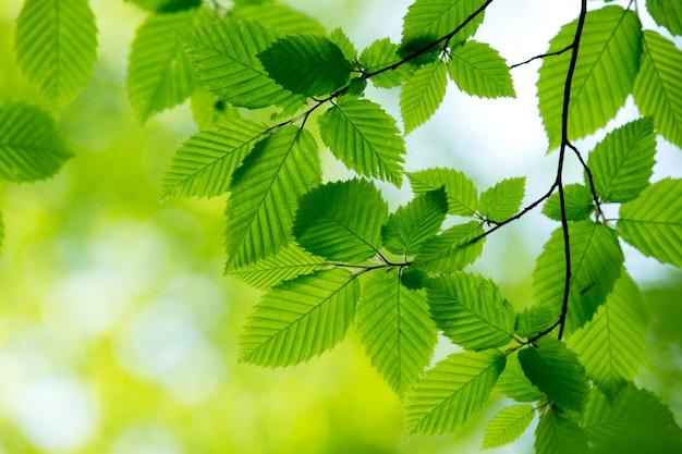 Natürlicher grüner hintergrund