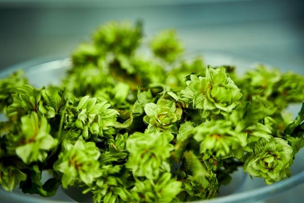 Natürlicher grüner hopfen in einem behälter