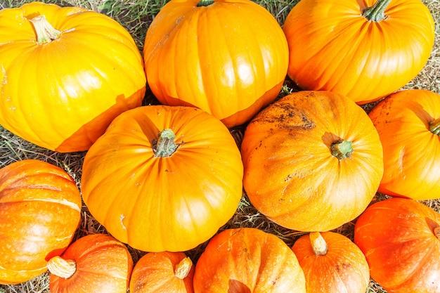 Natürlicher herbstfallansichtkürbis auf öko-bauernhofhintergrund. inspirierende oktober- oder september-tapete. wechsel der jahreszeiten, reifes bio-lebensmittelkonzept. halloween-party-erntedankfest.