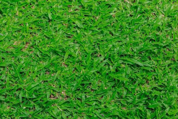 Natürlicher hintergrund - beschaffenheit des grünen grases