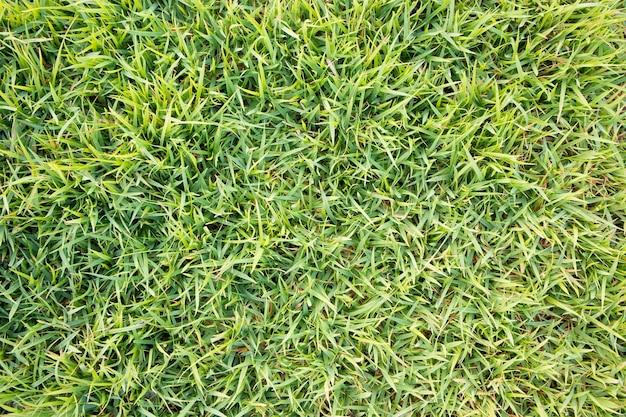 Natürlicher hintergrund der grünen grasbeschaffenheit