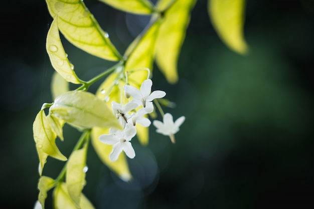 Natürlicher hintergrund der hellgrünen unscharfen abstrakten art vom betriebsblatt und vom kleinen moskito auf weißer blume