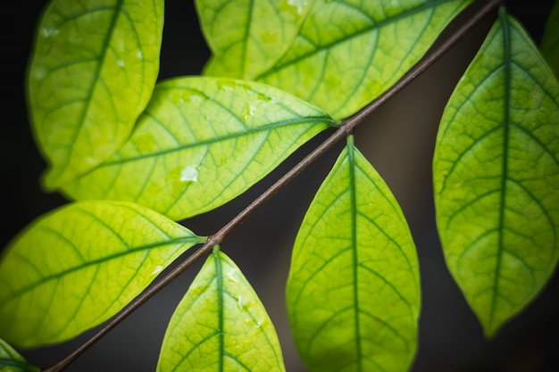 Natürlicher hintergrund der hellgrünen unscharfen abstrakten art vom betriebsblatt