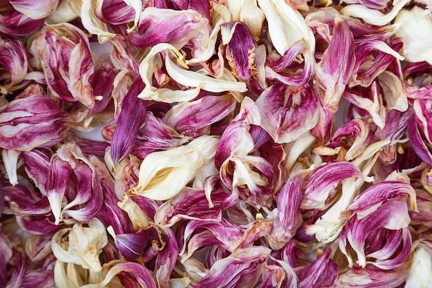Natürlicher hintergrund der trockenen blütenblätter der roten tulpen. herbarium der blütenblätter. viele getrocknete blütenblätter.