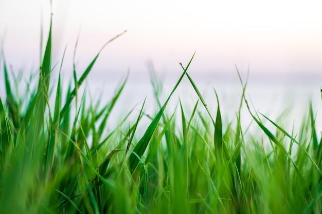 Natürlicher hintergrund des grünen grases mit himmel