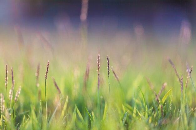 Natürlicher hintergrund des grünen grases mit selektivem fokus und bokeh