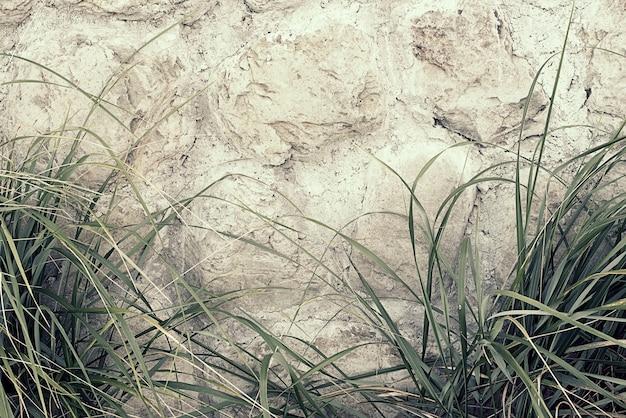 Natürlicher hintergrund des hohen gras- und steinzauns.