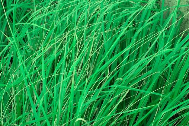 Natürlicher hintergrund des hohen grases.