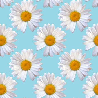 Natürlicher hintergrund des nahtlosen musters des weißen kamillegänseblümchens