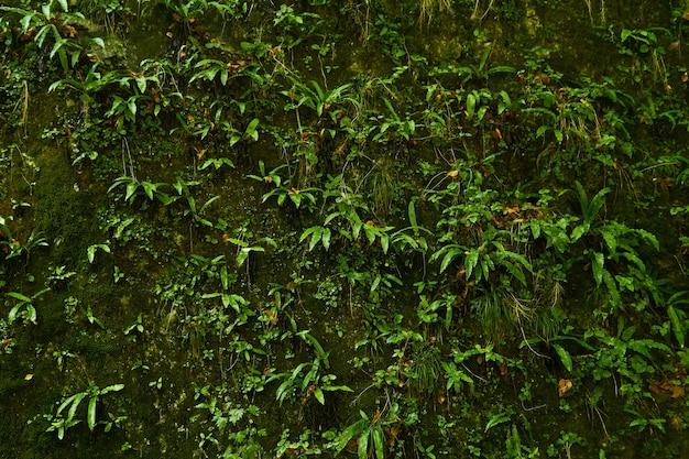 Natürlicher hintergrund - ein vertikaler felsen in einem tropischen wald, vollständig bedeckt mit einer vielzahl von hygrophiler vegetation, moosen und farnen