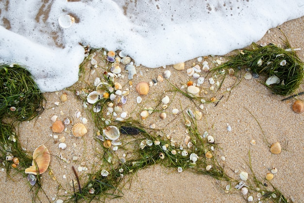 Natürlicher hintergrund verschiedener muscheln und algen am nassen sandstrand