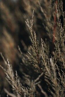 Natürlicher hintergrund von frischen grünen blättern der nadelpflanze. details zu wildtieren