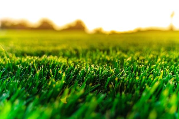 Natürlicher hintergrund von grünem gras