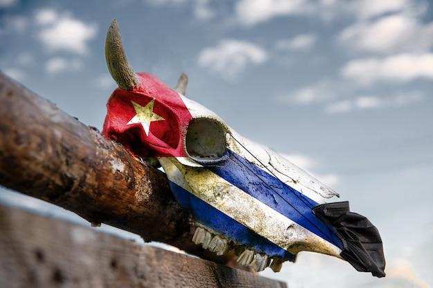 Natürlicher kuhschädel auf holzzaun mit kuba-flagge. medizinische schutzmaske wird vorne aufgesetzt