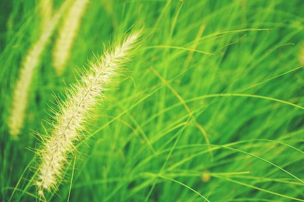 Natürlicher neuer abstrakter hintergrundabschluß des karminroten grases oben