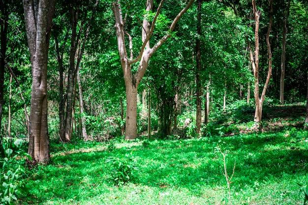 Natürlicher regenwald in südostasien.