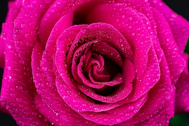 Natürlicher roter rosenhintergrund.