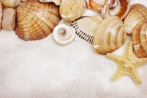 Natürlicher sommerhintergrund mit muscheln und stern nah oben auf feinem weißem sand.
