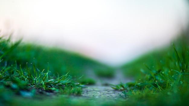Natürlicher, stark verschwommener hintergrund von grünen grashalmen hautnah frische wiese am sonnigen morgen