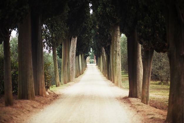 Natürlicher tunnel von bäumen gebildet