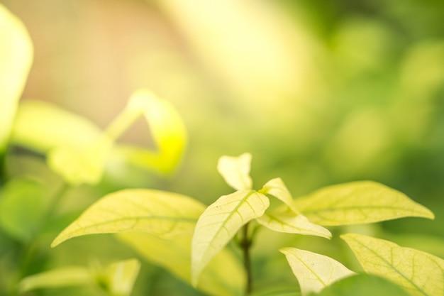 Natürlicher unscharfer hintergrund des frühlinges mit nahaufnahme des grünen blattes
