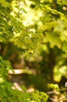 Natürlicher unscharfer hintergrund des weges im sommerwald