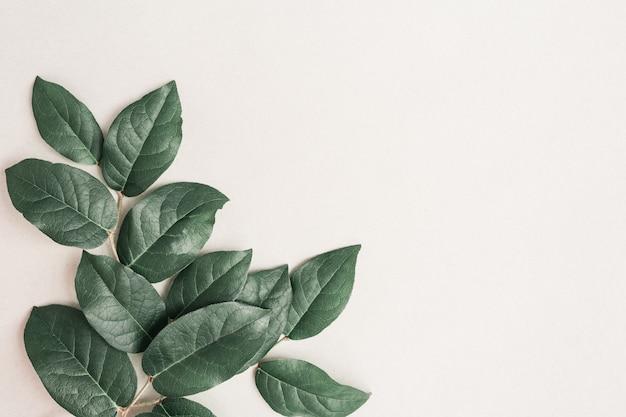 Natürlicher zweig des baumes mit grünen blättern auf hellem papierhintergrund. grußkarte mit frühlingsgrünpflanzen. umweltfreundliches konzept. draufsicht und flache lage.