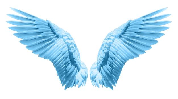 Natürliches blaues flügelgefieder