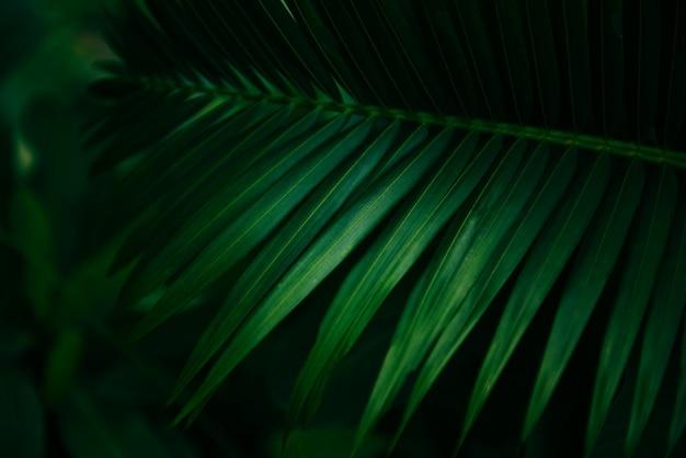 Natürliches grün der palmblätter - treiben sie schön im tropischen waldbetriebsdschungel blätter