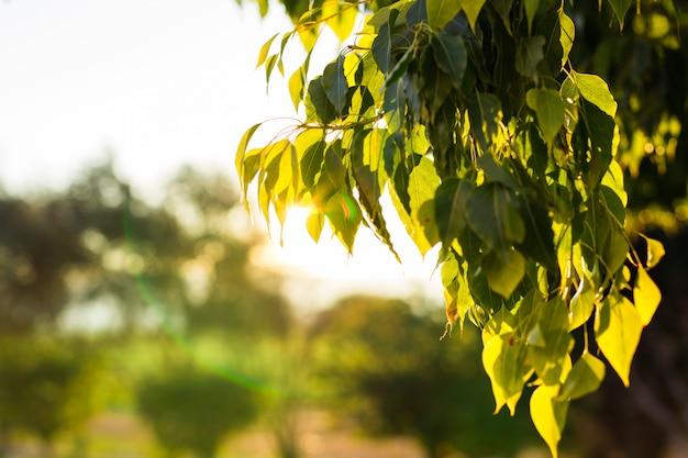 Natürliches grün mit selektivem fokus