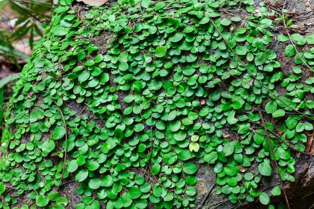 Natürliches grünes blatt im wilden für hintergrund und design