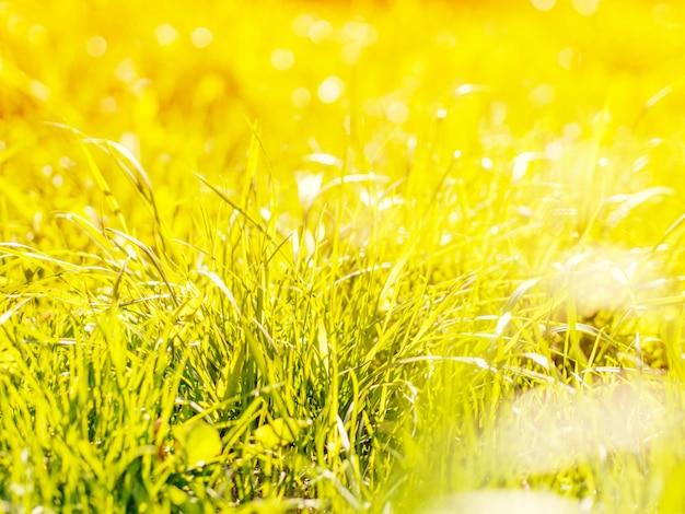 Natürliches grünes gras unscharfer hintergrund