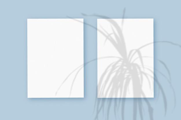 Natürliches licht wirft schatten von der pflanze auf 2 vertikale blätter aus weißem strukturiertem papierformat, die auf einem blauen strukturierten hintergrund liegen. attrappe, lehrmodell, simulation.