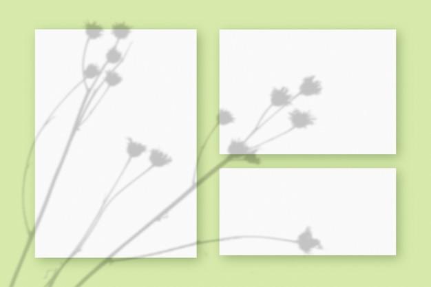 Natürliches licht wirft schatten von der pflanze auf 3 blätter weißes strukturiertes papierformat, die auf einem grünen strukturierten hintergrund liegen. attrappe, lehrmodell, simulation.