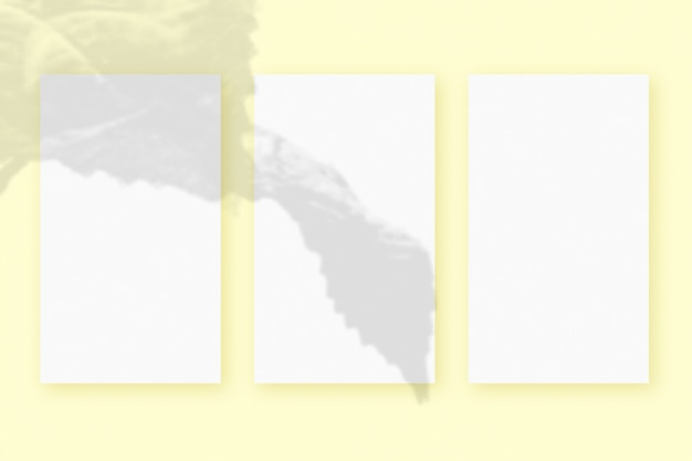 Natürliches licht wirft schatten von der pflanze auf 3 vertikale blätter aus weißem strukturiertem papierformat, die auf einem gelben strukturierten hintergrund liegen. attrappe, lehrmodell, simulation.
