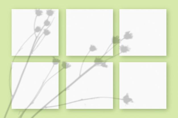 Natürliches licht wirft schatten von der pflanze auf 6 quadratische blätter weißen strukturierten papiers, die auf einem grünen strukturierten hintergrund liegen. attrappe, lehrmodell, simulation.